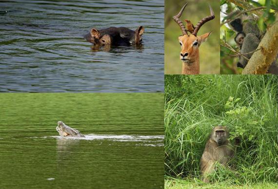 La fauna de Leopard Creek