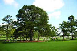 El pino de Eisenhower