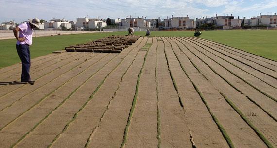 El Real Club de Golf de Sevilla construyó un vivero con la nueva variedad de hierba
