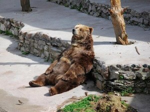 """Un oso haciendo """"Dufnering"""""""