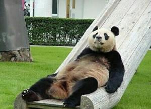 """Un panda haciendo """"Dufnering"""""""