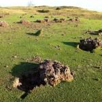 Destrozos salvajes en el Real Golf Club de Zarauz